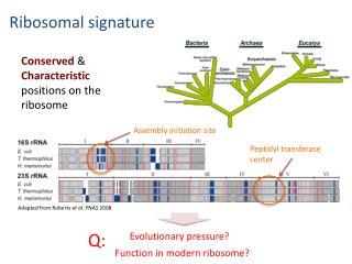 Ribosomal signature