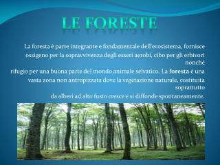 La foresta � parte integrante e fondamentale dell'ecosistema, fornisce