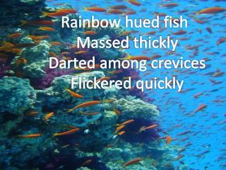 Rainbow hued fish Massed  thickly  Darted  among  crevices         Flickered  quickly