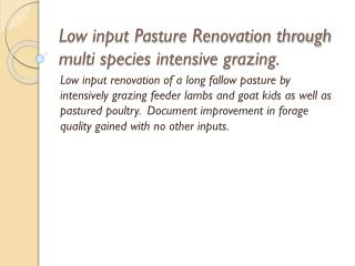 Low input Pasture Renovation through multi species intensive grazing.