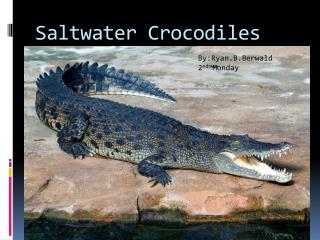 Saltwater Crocodiles