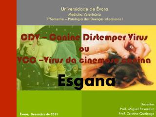Docentes Prof. Miguel Fevereiro  Prof. Cristina  Queiroga