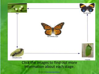Click the images to find out more information about each stage.