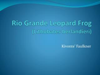 Rio Grande Leopard Frog (Lithobates berlandieri)