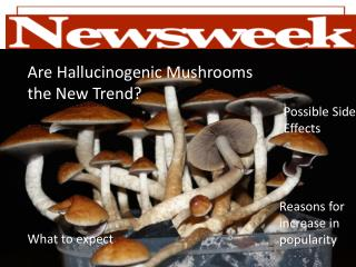 Are Hallucinogenic Mushrooms the New Trend?