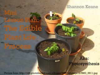 Mini  Lesson Plan: The Edible Plant Life Process