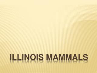 Illinois Mammals