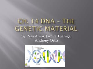 Ch. 14 DNA – The Genetic Material