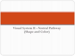 Visual System II – Ventral Pathway (Shape and Color)
