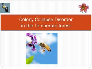Colony Collapse Disorder  in the Temperate forest