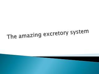 The amazing excretory system
