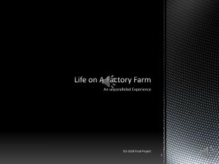 Life on A Factory Farm