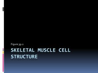 Skeletal Muscle Cell Structure