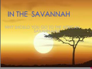 IN THE  SAVANNAH