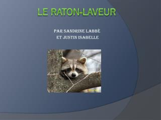 LE Raton-laveur