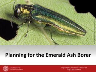 Planning for the Emerald Ash Borer