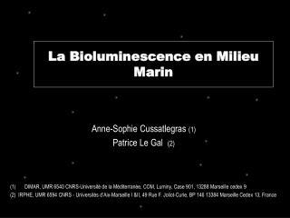 La Bioluminescence en Milieu Marin