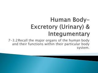 Human Body-  Excretory (Urinary) & Integumentary