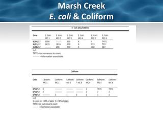 Marsh Creek  E. coli  & Coliform