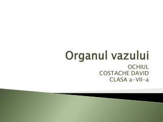 Organul vazului