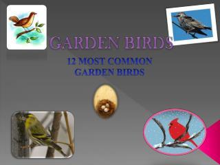12 MOST COMMON  GARDEN BIRDS