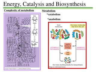 Energy, Catalysis and Biosynthesis