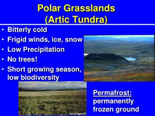 Polar Grasslands (Artic Tundra)