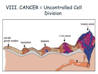 VIII. CANCER =  Uncontrolled  Cell                            Division