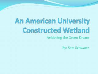 An American University Constructed Wetland