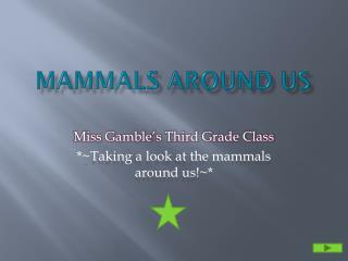 Mammals Around Us