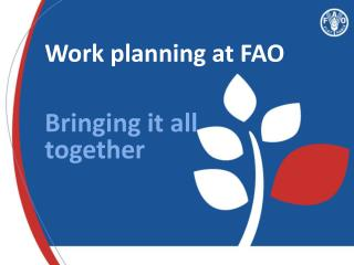 Work planning at FAO