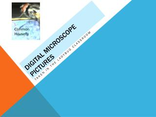 Digital Microscope Pictures