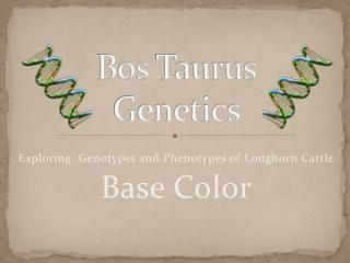 Bos  Taurus Genetics