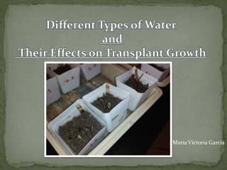 Different Types of  Water  and Their Effects on Transplant Growth