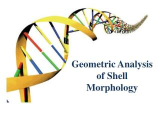 Geometric Analysis of Shell Morphology