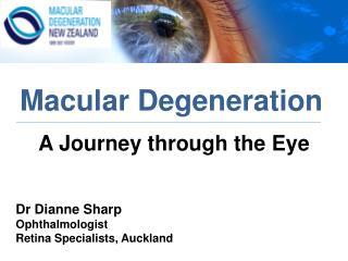 A Journey through the Eye