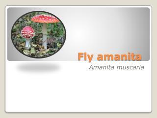 Fly amanita