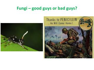 Fungi � good guys or bad guys?