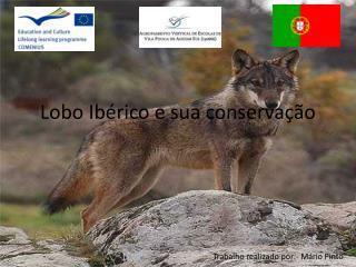 Lobo Ib�rico e sua conserva��o