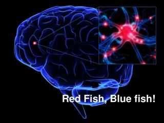 Red Fish, Blue fish!