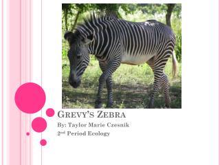 Grevy�s  Zebra