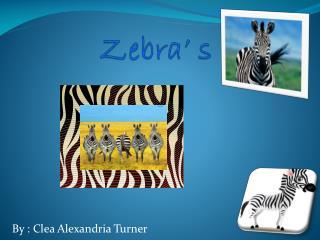 Zebra' s