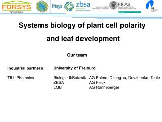 Systems biology of  plant cell polarity  and leaf development