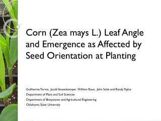 Corn (Zea mays L.) Leaf Angle and Emergence as Affected by Seed Orientation at Planting