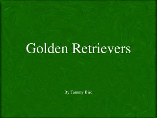 Golden  Retrievers By Tammy Bird