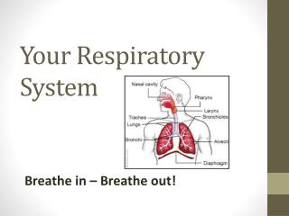 Your Respiratory System