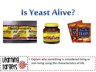 Is Yeast Alive?