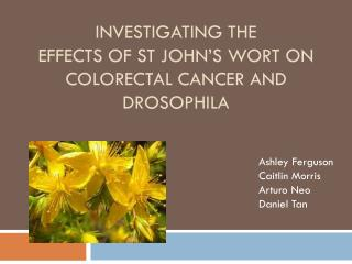 Investigating the  Effects of St John's  Wort  on Colorectal Cancer and DROSOPHILA