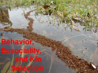 Behavior, Eusociality ,  a nd Kin  Selection