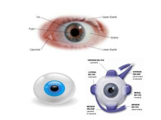 iknow/phys_eye_education.html#_nogo